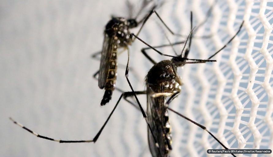 Aumenta preocupação com doenças ligadas ao Aedes aegypti no verão