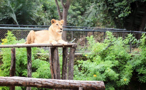 Requalificação do Zoobotânico vai simular habitats nativos nos recintos dos animais