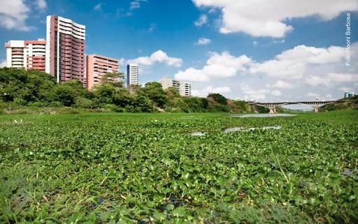 SEMAM monitora e esclarece atribuições para limpeza dos aguapés no rio Poti